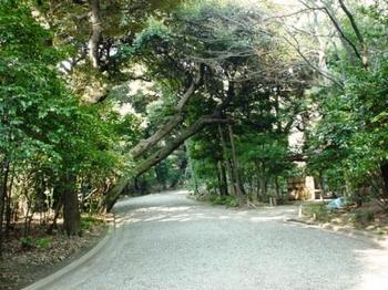 furukawa2.jpg